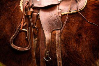 Cómo aprender sobre equitación por distintas fuentes