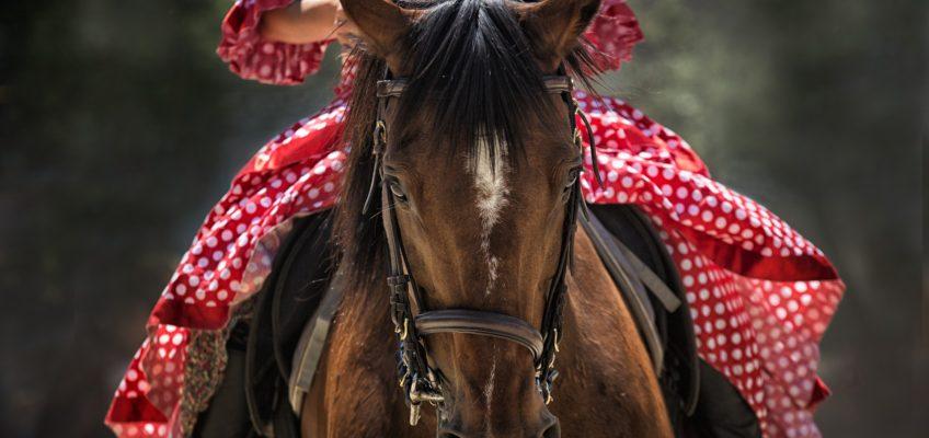 5 accesorios indispensables para montar a caballo